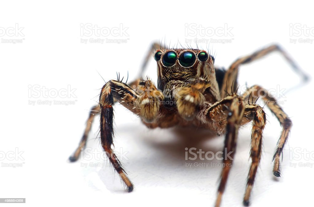 Spider on White Background stock photo