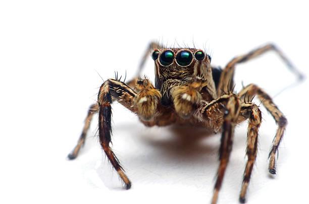 Spider sobre fondo blanco - foto de stock