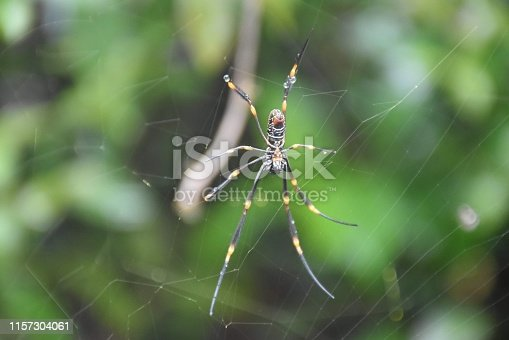 Web crawler found in the bush