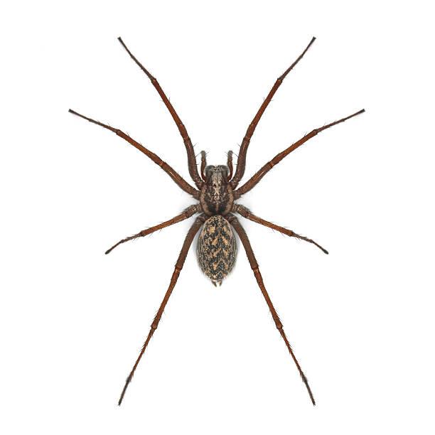 araignée - araignée photos et images de collection