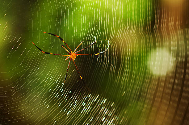 Spider Image of a spider on spiderweb. ensnare stock pictures, royalty-free photos & images
