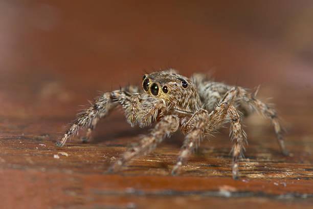 Aranha - foto de acervo