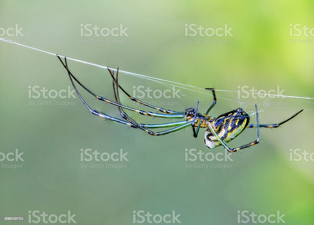 Spider stock photo