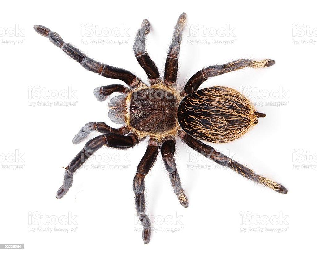 Araña - foto de stock
