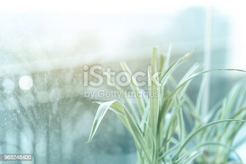 Spider Plant In White Ceramic Flowerpot Standing On Windowsill Relax Time Stock Photo & More Pictures of Beauty
