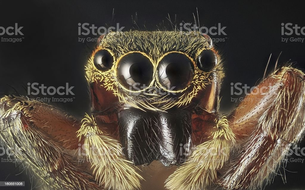 Spider portrait stock photo