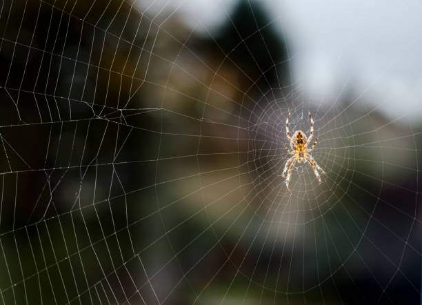 Spider Resting on Web stock photo