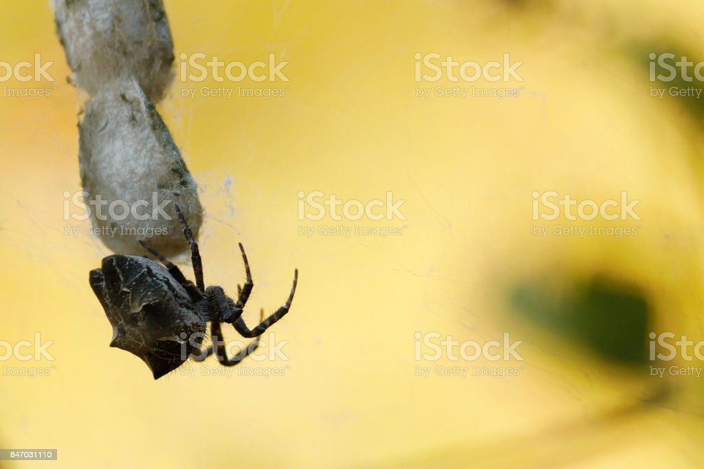 Spider rock-spider arachnid nature wildlife predator spiderweb hunting dangerous outdoors stock photo