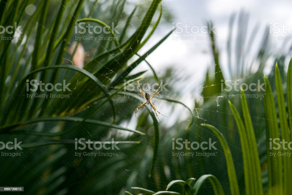 Spider waiting for prey in its own net stock photo