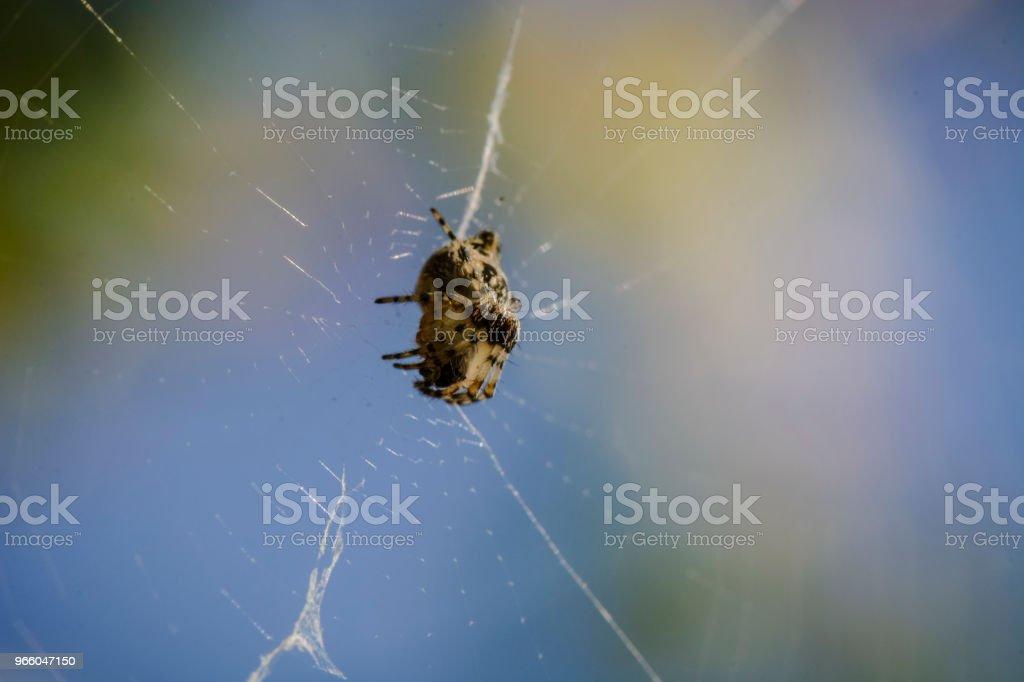 Spin in het midden van de spinrag wachten. - Royalty-free Angst Stockfoto