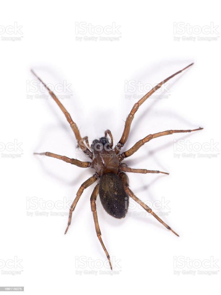 Spider Walk royalty-free stock photo