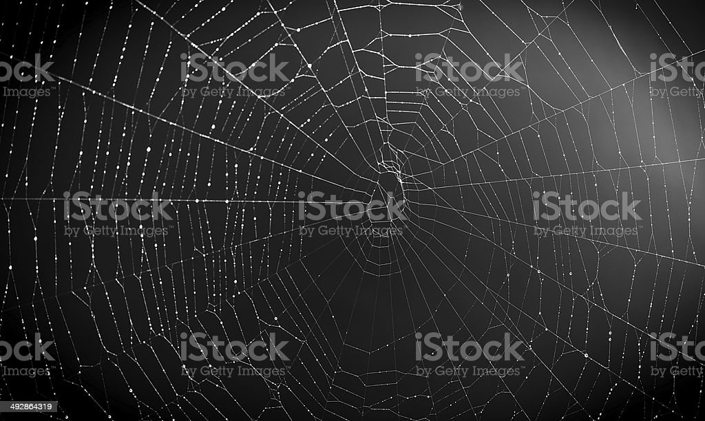 Spider web at night stock photo