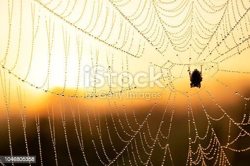 Spider Web at Sunrise