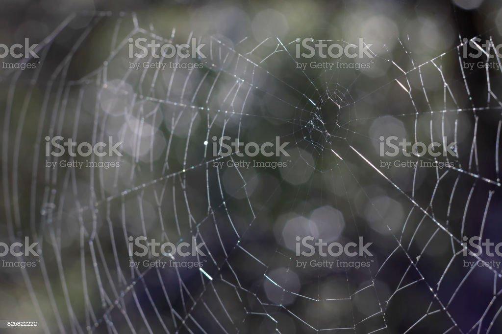 Fondo de web Spider. - foto de stock