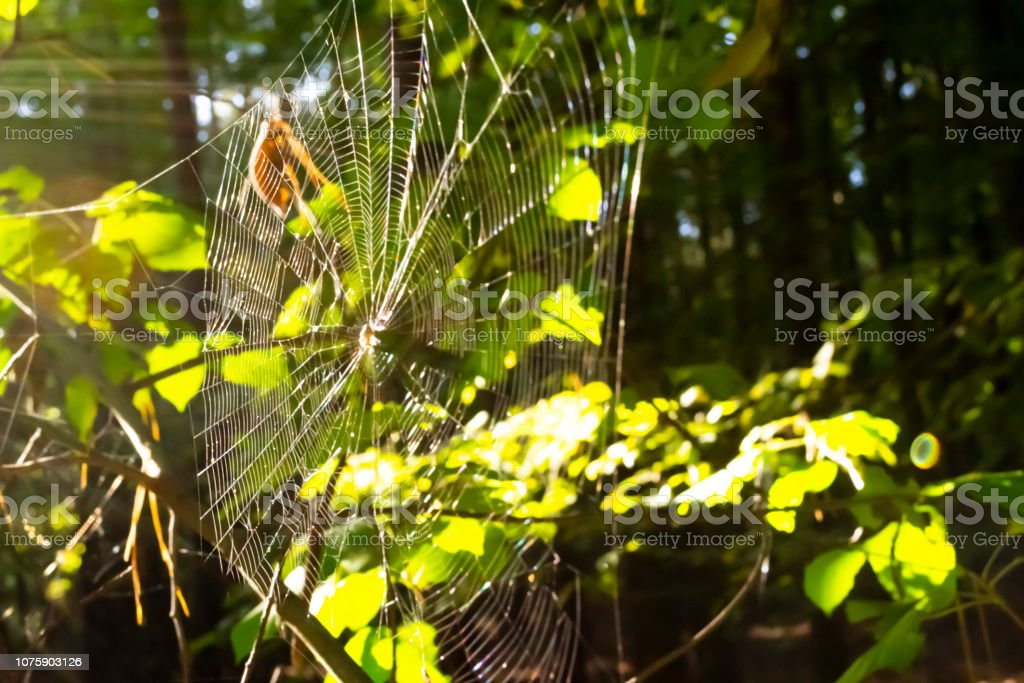 Spider web in forest. Blurry background with sun leaks