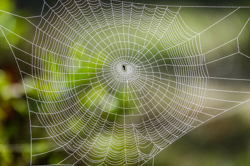 istock Spider web in sunny forest 1030886634