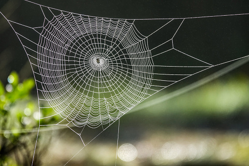 Spider web in sunny forest
