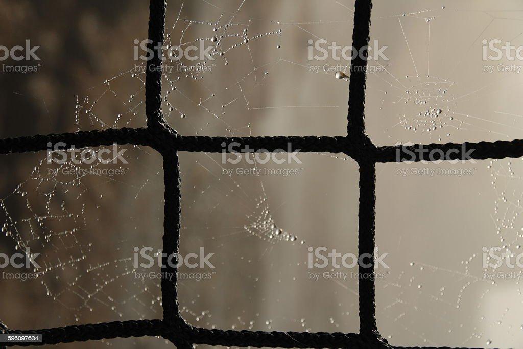 Spider web in the Morning Dew Lizenzfreies stock-foto