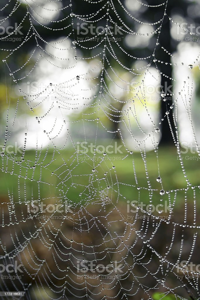 spider web in the morning series royalty-free stock photo