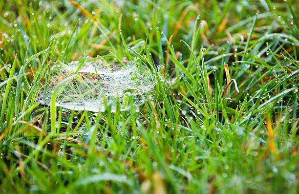 spinnennetz in nassen meadow - hajohoos stock-fotos und bilder
