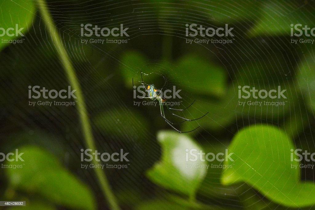 Ragnatela Su Sfondo Verde Acceso Fotografie Stock E Altre Immagini