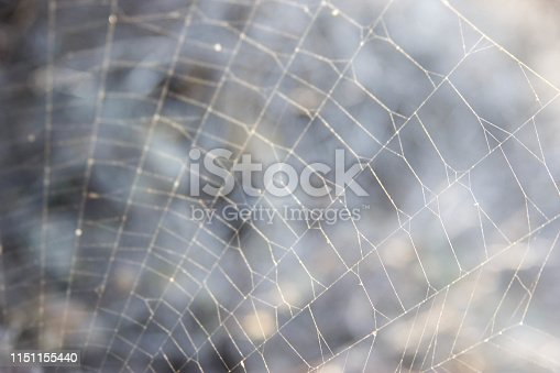 istock spider web on a gray background for text 1151155440