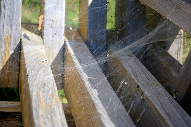 Spider Web on a Park Bench stock photo