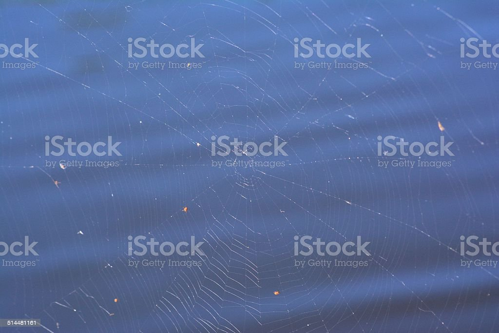 Spider Web on Blue stock photo