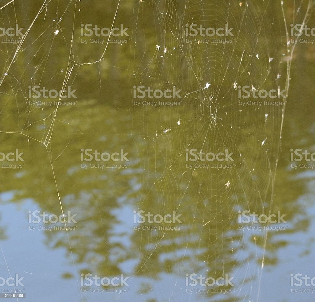 Spider Web over Brown Water stock photo