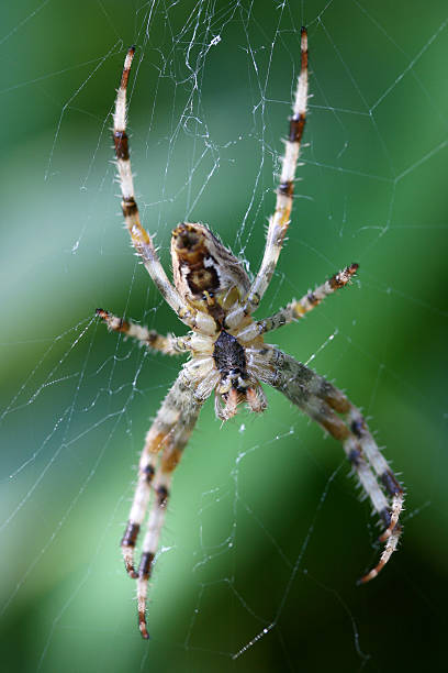 Spider & Web stock photo