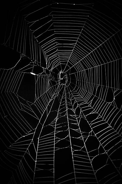 spider web - spider web stock photos and pictures