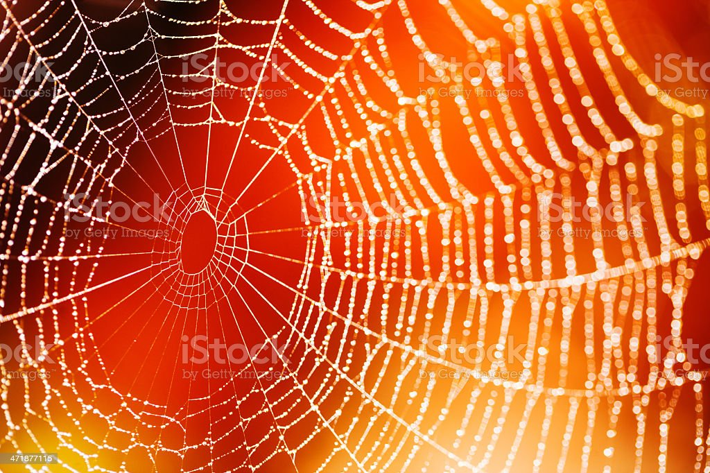 Spider web Spider web selective focus Animal Markings Stock Photo