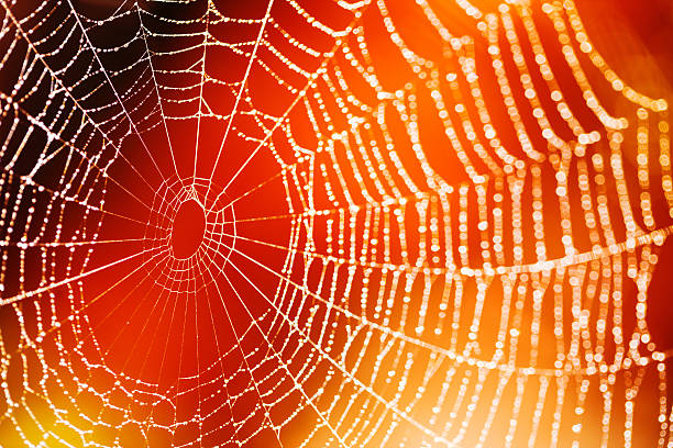 Spider web stock photo