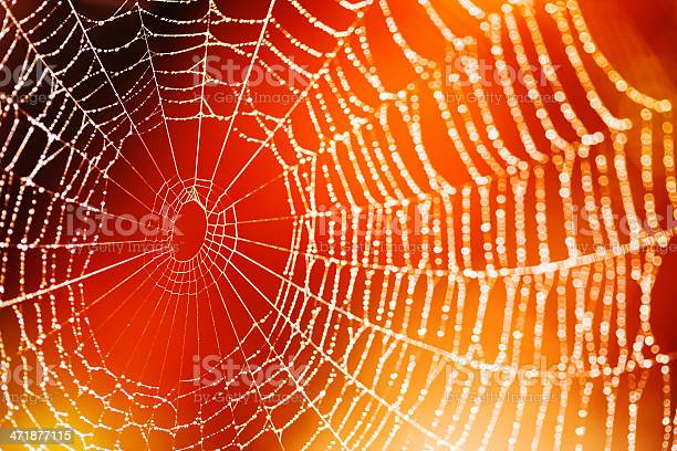 Spider Web Stock Photo - Download Image Now