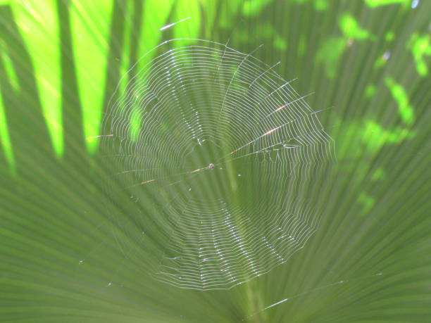 spider web - dianna dann narciso stock pictures, royalty-free photos & images