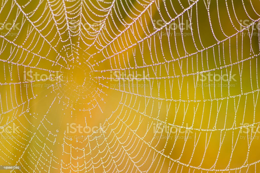Spider web with colorful background royalty-free stock photo