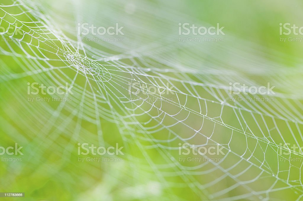 Spider web with dew drops on a green blurred background stock photo