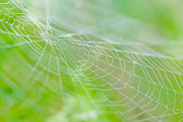 spider web with dew drops on a green blurred background - spider web stock photos and pictures