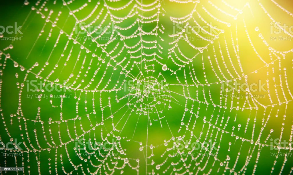 Spider web with dew drops stock photo