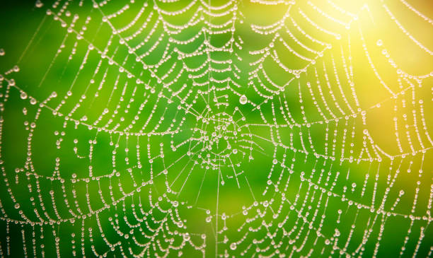 spider web with dew drops - spider web stock photos and pictures