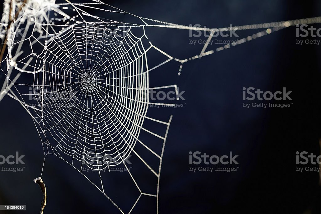 spider web. XXXL stock photo