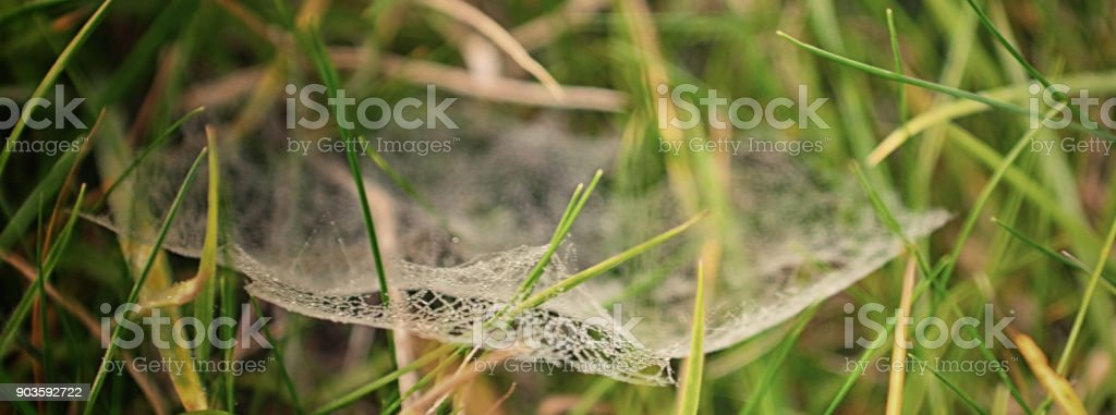 Spider webs stock photo