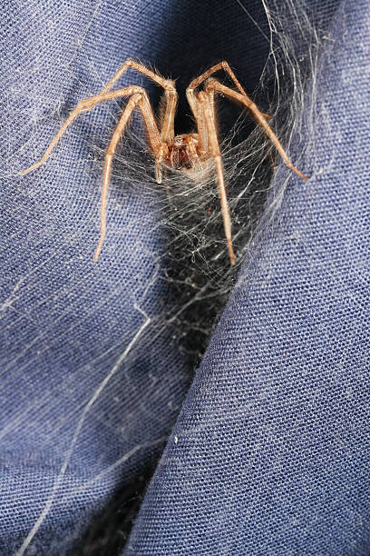 Spider's lair 01  ensnare stock pictures, royalty-free photos & images