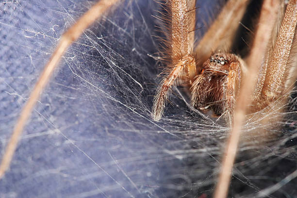 Spider's lair 02  ensnare stock pictures, royalty-free photos & images