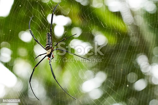 Spiders are trapping the pulp using spider webs. Small insects fly to the spider web to find food.