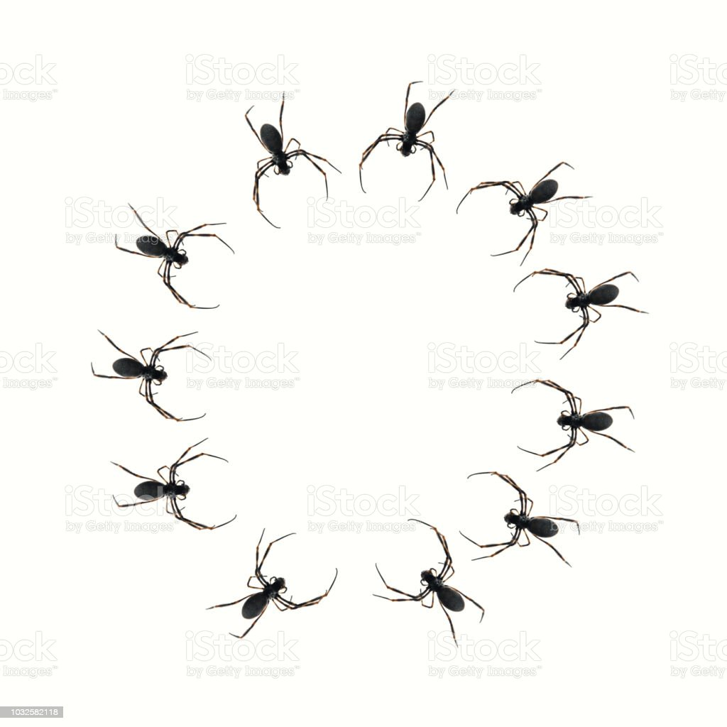 Spiders Forming a Circle on a Transparent Background. stock photo