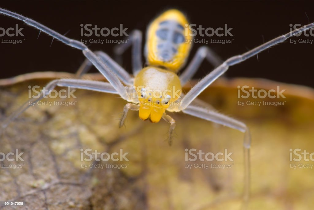 Spiders Macro royalty-free stock photo