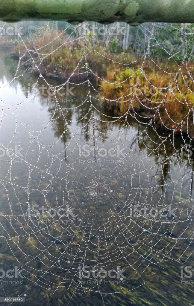 A Spiders Misty Morning stock photo