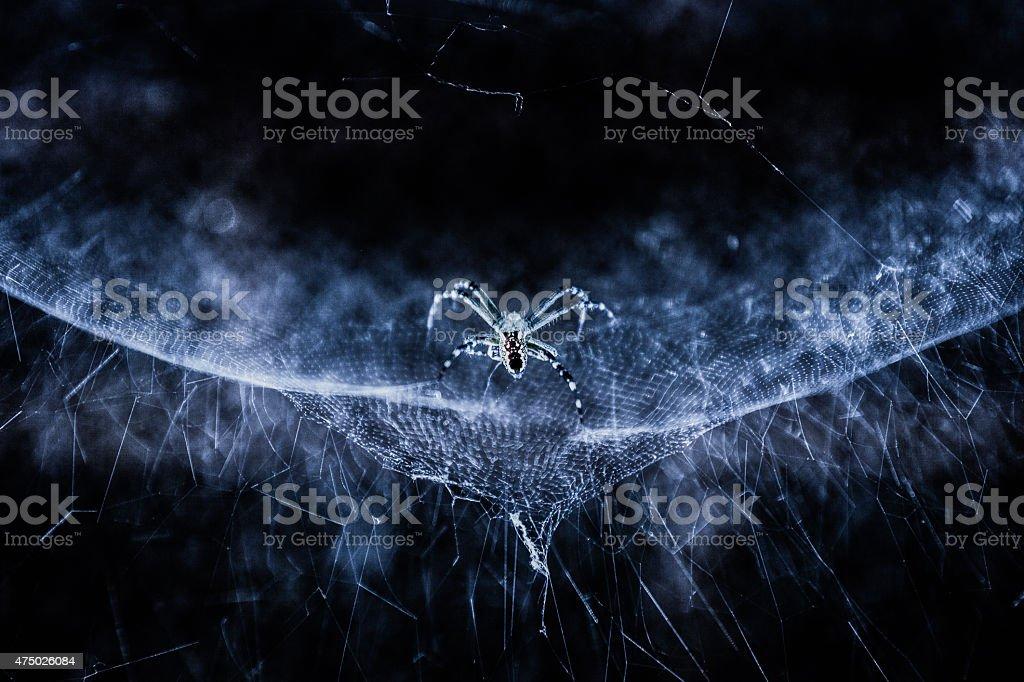 Spiders stock photo