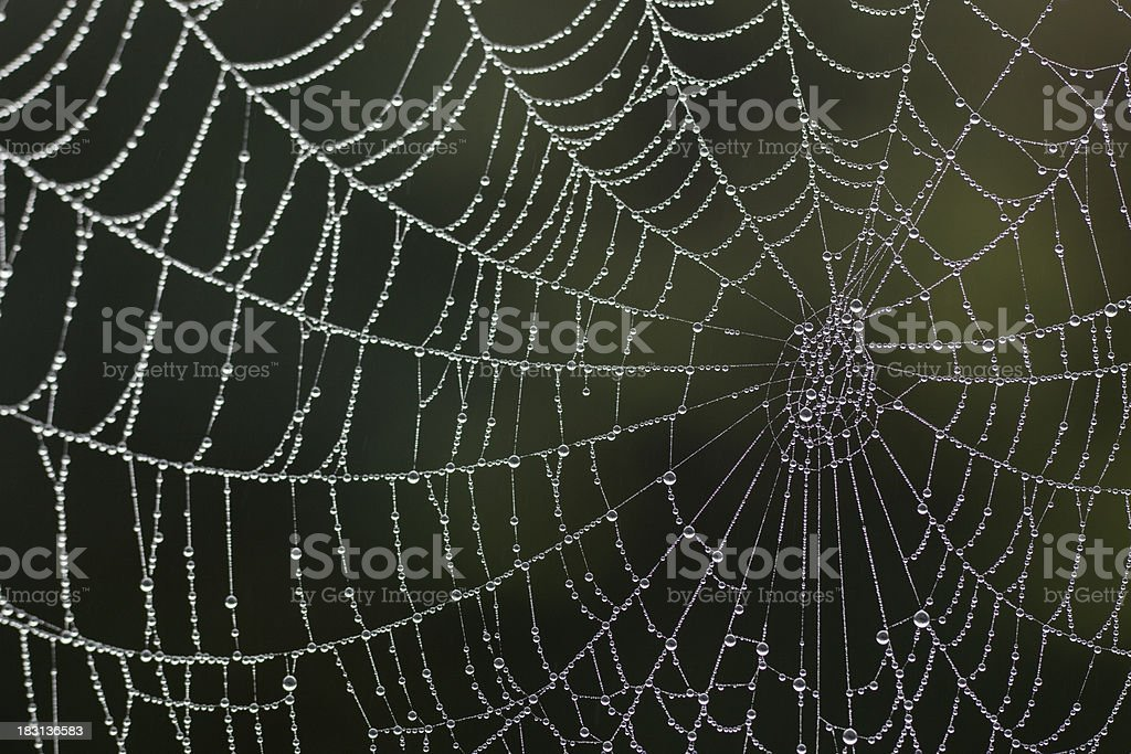 Spider's Web royalty-free stock photo